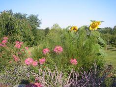 Freeborn garden Old Houses, Patio, Places, Garden, Yard, Terrace, Garten, Lawn And Garden, Outdoor