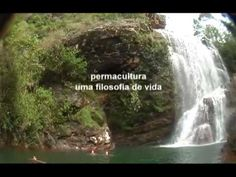 PROGRAMA ALTERNATIVO REDE SBT - PERMACULTURA E ALIMENTAÇÃO - PERMACULTOR CLÁUDIO JACINTHO