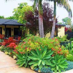 Gorgeous succulent garden!
