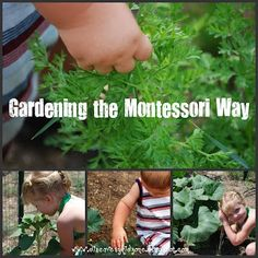 Simple guide to make the most of gardening with kids in the Montessori way, connecting it with learning.