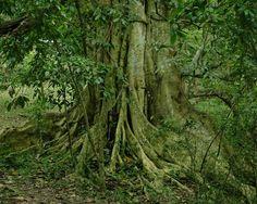 Tout en racines
