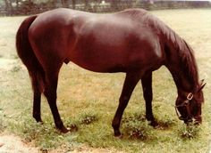 Sham in 1978.  A great horse, overshadowed by one even greater.