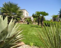 Nemrznuce palmy Mnozí z nás jsme to ve chvíli, kdy už nás omrzely kaktusy, citrusy nebo orchideje s palmami také zkoušeli. S větším či menším úspěchem. Jenže Josef Bučko z Kačic u Kladna není žádný troškař. Jaképak zimní zahrady nebo obývák, jeho v našich klimatických podmínkách neuvěřitelný palmový háj mu roste přímo před domem!</p>
