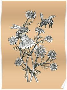 'bees and chamomile on dusty pink background' Poster by EllenLambrichts Bee And Flower Tattoo, Bee On Flower, Flower Tattoos, Background S, Vintage Posters, Illustration, Artsy, Canvas Prints, Drawings