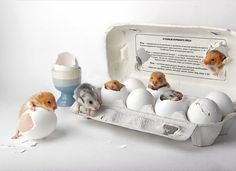 about eggs by Elena Eremina on 500px