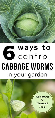 Cabbage is a great crop to grow in your backyard garden! Cabbage worms are not so great. Here are 6 all-natural, chemical free ways to control cabbage worms in your garden! #OrganicGarden