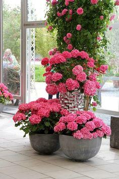Colorful Hydrangeas for Your Balcony - Unique Balcony & Garden Decoration and Easy DIY Ideas Balcony Garden, Garden Pots, Container Plants, Container Gardening, Colorful Flowers, Beautiful Flowers, Indoor Gardening Supplies, Hydrangea Colors, Balcony Flowers