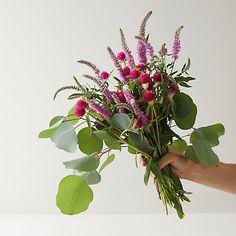 Check out Pink Veronica Eucalyptus Bouquet from Terrain Floral Fascinators, Eucalyptus Bouquet, Outdoor Garden Furniture, Bridesmaid Bouquet, Bridal Bouquets, Planting Flowers, Flowering Plants, Potted Plants, Growing Plants