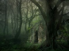 fairy tale places / lori-rocks: forest haven by wyldraven - beautiful portals picture on VisualizeUs - Bookmark pictures and videos that inspire you. Social bookmarking of pictures and videos. Find your pictures and videos. Enchanted Wood, Dark Forest, Magical Forest, Photo On Wood, Jolie Photo, Fantasy World, Dark Fantasy, Faeries, Mists