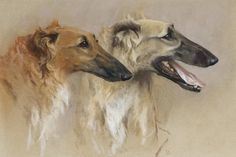 View Head studies of two Borzoi by Arthur Wardle on artnet. Browse upcoming and past auction lots by Arthur Wardle. Animal Paintings, Animal Drawings, Greyhound Kunst, Magyar Agar, Russian Wolfhound, Famous Dogs, Sports Art, Dog Portraits, Victorian