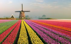 From the tulip gardens of Holland to the temples of India, these colorful places will light up your imagination on your travels. #flights & #hotels #Cruises #RentalCars #mexico #lajolla #nyc #sandiego #sky #clouds #beach #food #nature #sunset #night #love #harmonyoftheseas #funny #amazing #awesome #yum #cute #luxury #running #hiking #flying