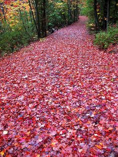 New fall nature photography leaves paths ideas Beautiful World, Beautiful Places, Beautiful Pictures, Beautiful Scenery, Peaceful Places, Autumn Nature, Autumn Leaves, Autumn Scenery, Red Leaves