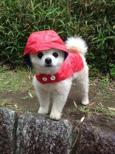 shunsuke the dog | the cutest babe