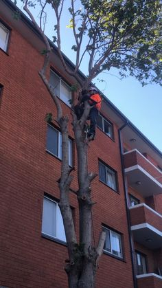 Our team of experienced Sydney tree removal service providers possess the experience and have been equipped with the most advanced tree removal machinery and equipment to enable them to deliver your Sydney tree removal service in the best manner possible. Tree Removal Service, Removal Services, Garden Trees, Utility Pole, Sydney, How To Remove, Touch, Life