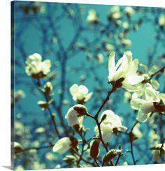Canadian blossom via @greatbigcanvas at GreatBIGCanvas.com.