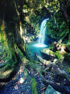 Enchanted falls in the forest ~ Rio Grande, Puerto Rico  #vacation