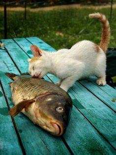 I love you, my fishy #kitty #fishing