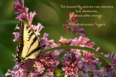 The butterfly counts not months but moments, and has time enough. Tagore Quotes, Butterfly Photos, Beautiful Butterflies, Social Media, In This Moment, Plants, Photography, Image, Flora