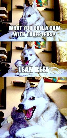 14 Best Jokes From Pun Husky - Jokes - Funny memes - - Why Did Mozart Killed His Chicken? The post 14 Best Jokes From Pun Husky appeared first on Gag Dad. Dog Jokes, Puns Jokes, Animal Jokes, Funny Animal Memes, Funny Puns, Funny Animal Pictures, Memes Humor, Funny Animals, Chemistry Jokes