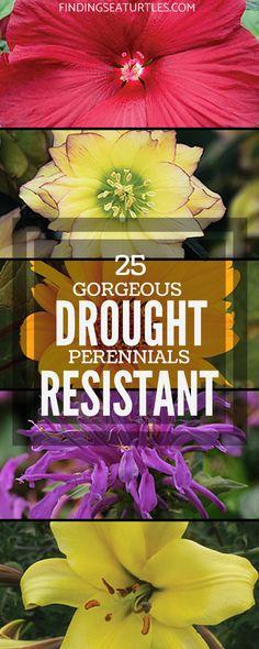 25 Drought Resistant Perennials #Gardening #Landscaping #DroughtResistantPlants #Perennials #DroughtResistantPerennials