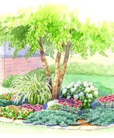 A garden under a tree isn't always restricted to just the usual tried-and-true shade-lovers. Sometimes, the sunlight that reaches beneath a small or multistemmed tree is enough to include some surprising sun-loving plant choices. Here's a plan that includes several colorful characters from both camps. Under Tree Bed PDF
