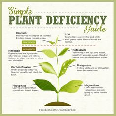 Identifying Plant Nutrient Deficiencies | Grow REAL Food - Organic, Non-GMO Food in Your Backyard