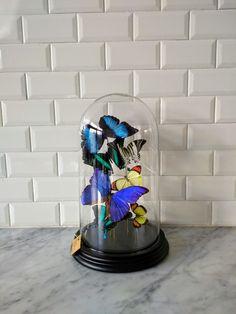 Butterflies, feels like spring.  Made by INScT.