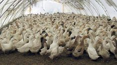 Министър забрани достъпа и риболова в Дуранкулашко и Шабленско езеро заради опасност от птичи грип (ВИДЕО)