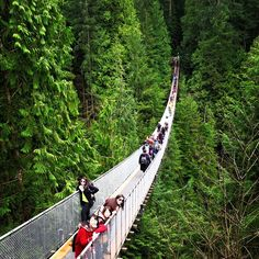 Vancouver - Natureza exuberante - Capilano Suspention Bridge - palco de vários filmes, entre eles Indiana Jones. (Photo by Karina Valeretto)