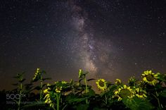 Star Flowers  Milky Way raising over a Sunflower field on the darkest fields of Romania.  Camera: Canon EOS 600D Lens: Samyang 14 mm Focal Length: 14mm Shutter Speed: 30sec Aperture: f/2.8 ISO/Film: 3200  Image credit: http://ift.tt/2a8OqyA Visit http://ift.tt/1qPHad3 and read how to see the #MilkyWay  #Galaxy #Stars #Nightscape #Astrophotography