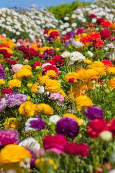 ....summer flowers....