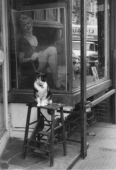 "Victor Macarol ""Cat Marilyn"", Thompson Street, New York City. 1988"