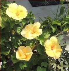 Florida Gardening 101:  South Florida gardening basics for beginners