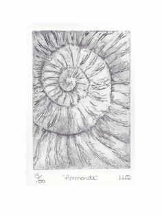 Etching no.15 of an ammonite fossil in an edition of 100 £30.00