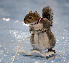 squirrel ski - Norton Safe Search