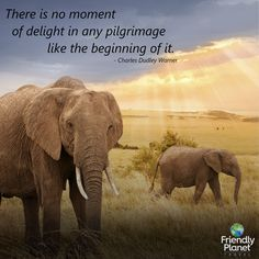 Experience the greatest adventure of all on our discount Kenya safari tour. Book the exotic adventure of your dreams with Friendly Planet today. African Safari, Vacation Packages, Greatest Adventure, Premium Wordpress Themes, Pilgrimage, Kenya, Itunes, Travel Inspiration