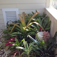 My Bromeliad Garden