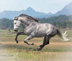 8422M1.jpg :: Andalusian stallion