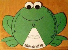 This frog life cycle wheel is so adorable! This frog life cycle wheel is so adorable! 1st Grade Science, Kindergarten Science, Teaching Science, Science For Kids, Science And Nature, Science Lessons, Life Science, Art Lessons, Frog Activities