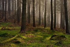 Ladybower Woods, England