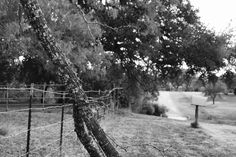 Simplicity. | Texas rural rustic photography black and white beautiful nature love landscape