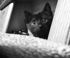 Black Kitten ❤️