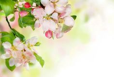 Blooming Spring Background