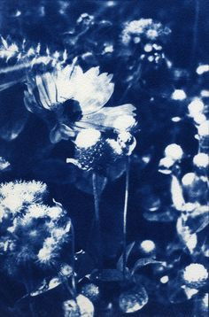 Cyanotype Print  Garden by VintagePopp on Etsy, $150.00