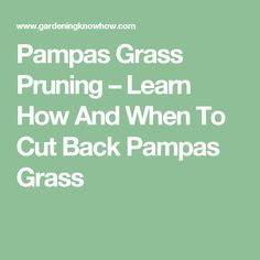 Pampas Grass Pruning – Learn How And When To Cut Back Pampas Grass
