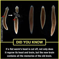 Decapitated worms regrow heads, keep old memories! True Interesting Facts, Some Amazing Facts, Interesting Facts About World, Intresting Facts, Unbelievable Facts, Wierd Facts, Wow Facts, Real Facts, Wtf Fun Facts
