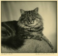 A Compendium of Design (...and occasionally other things): E. Chambré Hardman and the art of pet portraiture . . . Mr. and Mrs A. M. Blessett's Cat