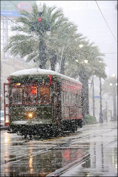 An unexpected snowfall in New Orleans, La., blanketed Canal Street's palm trees and streetcars on Dec. 11, 2008.