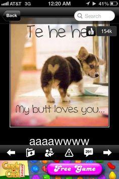 So cute little puppy butt