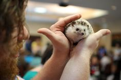Hedgehog owners hate the name Sonic. If you have a hedgehog, you better be creative with the name. The best name at this convention was Sir Felix Gaylord Whumplebunch. | 40 Things We Learned At The Hedgehog Convention